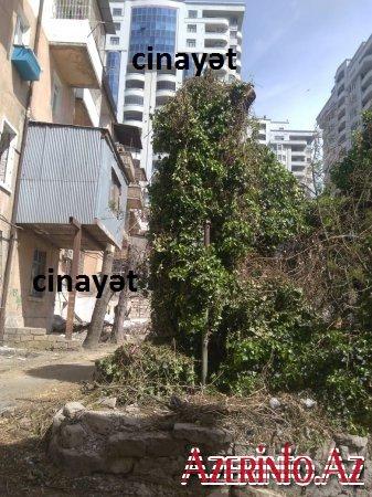 """""""Yasam residence"""" 70 ağacı birdən kəsib, ETSN rəsmisi isə hədə qorxu gəlir –FOTO, VİDEO"""