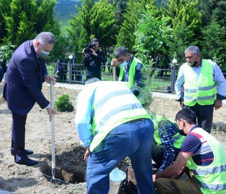 Ümummilli Lider Heydər Əliyevin anadan olmasının 98-ci ildönümünə həsr olunmuş ağacəkmə aksiyası keçirilib