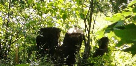 Ekologiya və təbii sərvətlər nazirliyinin Hirkan qoruğunda baş verən qanunsuzluqlar - Şikayətçinin sözləri ilə - Foto+Audio+Video